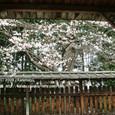 2009.04.03up Honkatata/本堅田181