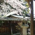 2009.04.12up Honkatata/本堅田185