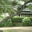 2008.07.02up Honkatata/本堅田071
