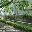 2008.07.23up Honkatata/本堅田076