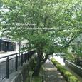 2008.07.27up Honkatata/本堅田081