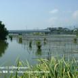 2008.09.12up 堅田内湖 ~Honkatata/本堅田107