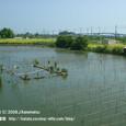 2008.09.13up 堅田内湖 ~Honkatata/本堅田108