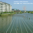 2008.09.14up 堅田内湖 ~Honkatata/本堅田109