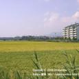 2008.09.30up 堅田内湖 ~Honkatata/本堅田112