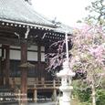 2008.05.19up Honkatata/本堅田049