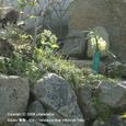 2008.03.25up Honkatata/本堅田036