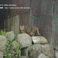 2008.03.26up Honkatata/本堅田037
