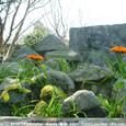 2010.04.11up Honkatata/本堅田249