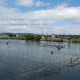 2010.05.31up Honkatata/本堅田289