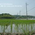2010.06.05up Honkatata/本堅田290