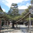 2011.02.26up Honkatata/本堅田356