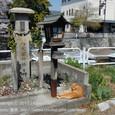 2011.04.22up Honkatata/本堅田378