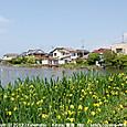 2012.06.03up Honkatata/本堅田469