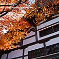 2011.11.17up Honkatata/本堅田445
