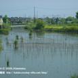 2008.09.14up 堅田内湖 ~Imakatata/今堅田033