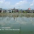 2008.09.17up 堅田内湖 ~Imakatata/今堅田038