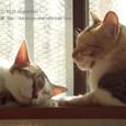 02 お昼寝猫(1)