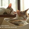 03 お昼寝猫(2)