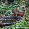 25-1 滋賀の里山から(6-1) 春になると北へ帰る渡り鳥、シロハラ