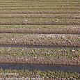 44-1 滋賀の里山から(20-1) 一雨ごとに潤む。春の畑の幾何学模様