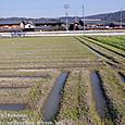 44-2 滋賀の里山から(20-2) 一雨ごとに潤む。春の畑の幾何学模様