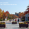 37 紅葉の風景、滋賀(2) 立命館大学びわこ・くさつキャンパス(校門の前で)