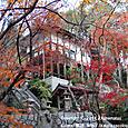 39-1 紅葉の風景、滋賀(4-1) 不動寺