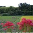 2010.10.12up<br/>一休さん、晩年の地・一休寺を訪ねて~京田辺(3-3)