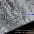 2011.03.06up<br/>ロープウェーでマイナス2℃の世界へ~御在所(1-3)