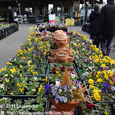 2011.03.05up<br/>なばなの里花市場を見に行く~長島(4-5)