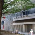 2011.08.20up<br/>2010年夏、東京にて(06-3) 木陰で涼むひととき(東京文化会館の前にて)