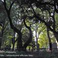 2011.08.20up<br/>2010年夏、東京にて(06-4) 上野恩賜公園の緑