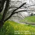 2010.03.30up 堅田周辺の町/Towns around Katata 014