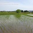 2011.06.02up 堅田周辺の町/Towns around Katata 049