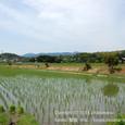 2011.06.07up 堅田周辺の町/Towns around Katata 054