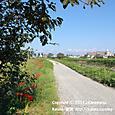 2011.09.29up 堅田周辺の町/Towns around Katata 096