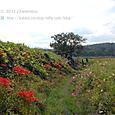 2011.09.29up 堅田周辺の町/Towns around Katata 097