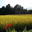 2011.10.04up 堅田周辺の町/Towns around Katata 104