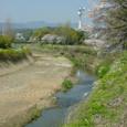 079 2010.03.29up Tenjingawa Green belt/天神川緑地019 天神川の桜