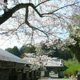 083 2010.04.02up Honkatata/本堅田241 妙法寺の桜