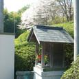 085 2010.04.05up Honkatata/本堅田242 満開の桜と地蔵堂