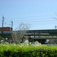 118 2011.04.12up Tenjingawa Green belt/天神川緑地021 JR113系湘南色、ユキヤナギの花咲く天神川の上を行く