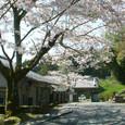 058 2009.04.14up Honkatata/本堅田187