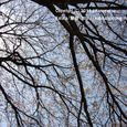 122 2011.04.14up 堅田周辺の町/Towns around Katata 031 中村八幡宮の桜3