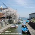 130 2011.04.22up Honkatata/本堅田379 堅田港、水路、舟、左岸の桜(港橋の上から)