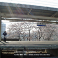 021 2008.04.10up 桜 ~Station/駅011