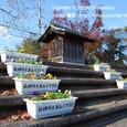 070 2009.11.27up Tenjingawa Green belt/天神川緑地 016