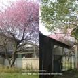 005 2008.03.16up tree・flower/木・花004 椿と紅梅