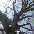 027 2008.04.23up tree・flower/木・花010 本堅田の児童公園にて